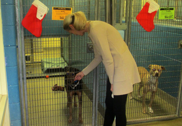 Richmond SPCA CEO Robin Starr greets Wendy, an Airedale terrier mix. (Photos by Brandy Brubaker)