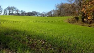There is more than 200 acres of operational farmland on the property.