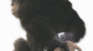 PETA chimpanzee ad